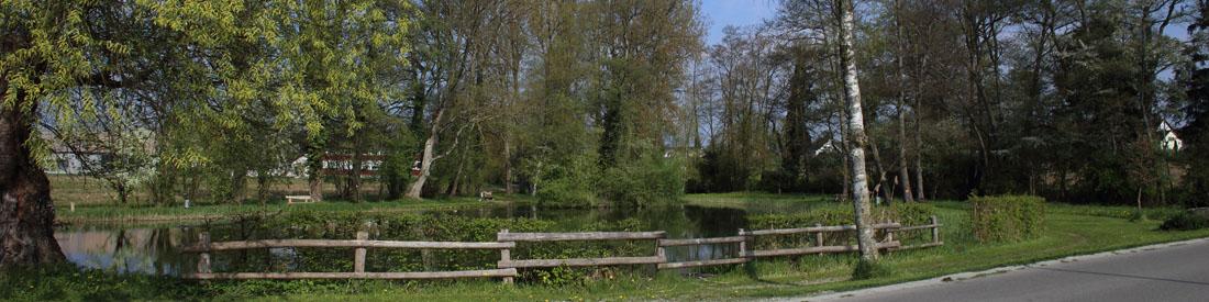 Marthalen-Schilling-Oeliweiher3-20140413 image